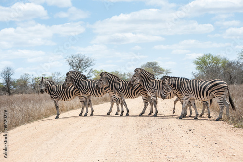 Obraz Zebra crossing road, Kruger National Park, South Africa - fototapety do salonu
