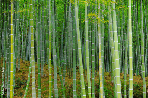 Recess Fitting Bamboo Bamboo forest