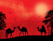 Bedouin and camels during the red night