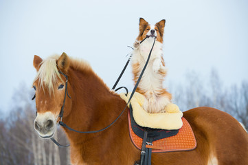 Red dog on the horse