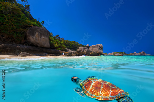 Green Turtle at Similan Islands