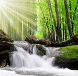 Siklawa w wiosna lesie - 61433080