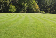 Green, Striped Lawn In The Park