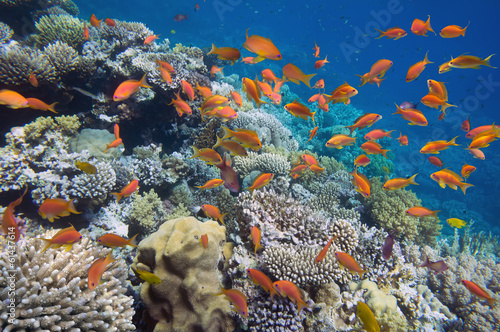 Poster Coral reefs Tropical Fish on coral reef