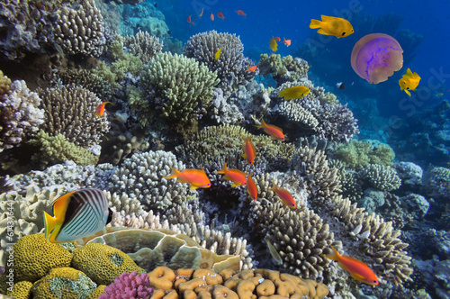Poster Sous-marin Underwater life of Red sea in Egypt