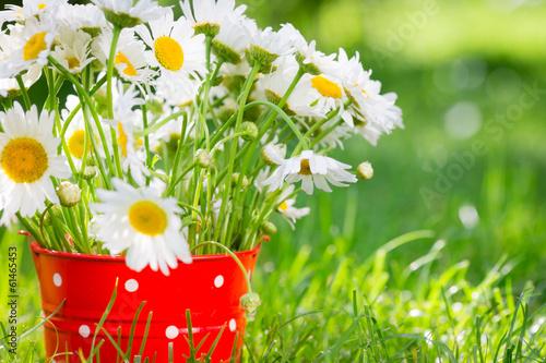 Staande foto Lente Spring flowers