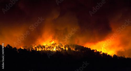 Valokuva  incendio forestal de noche