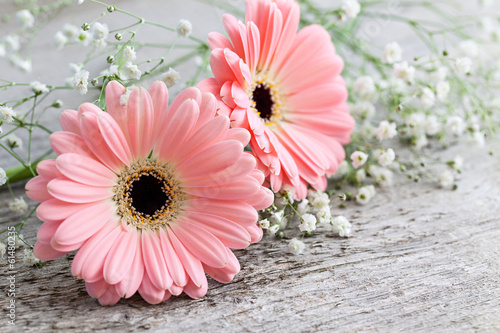Photo Stands Gerbera Pinke Gerbera auf Holz