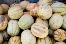 Tuscan Melon Cantalopes At Far...