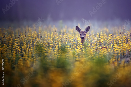 Obraz na płótnie Roe-deer in the morning mist
