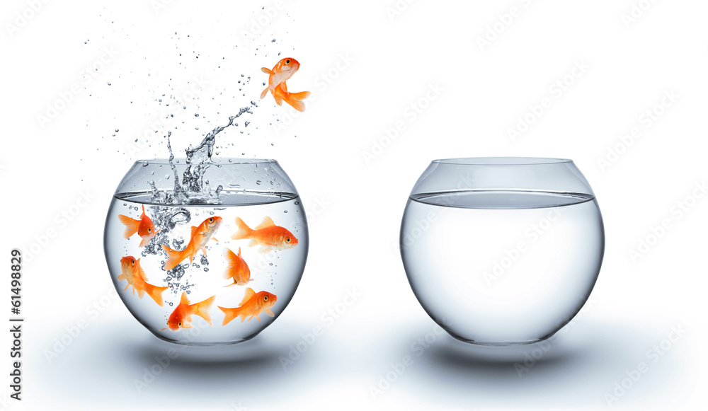Fototapeta goldfish jumping out of the water - improvement concept - white