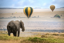 African  Elephant Looking At L...