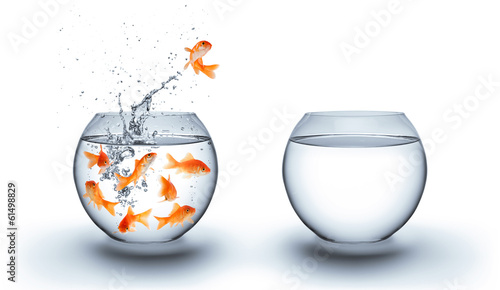 Fototapeta goldfish jumping out of the water - improvement concept - white obraz