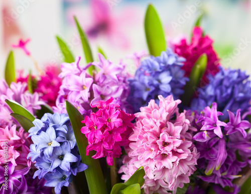 Papiers peints Lilac Multicolored hyacinths