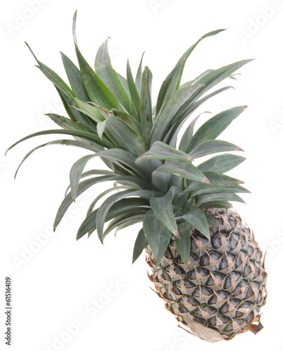 Fototapety, obrazy: Pineapple, Pineapple tropical fruit on background