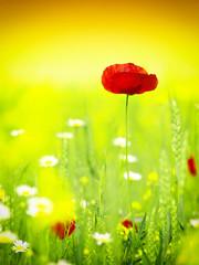 Panel Szklany Podświetlane Do dentysty Summer wildflowers