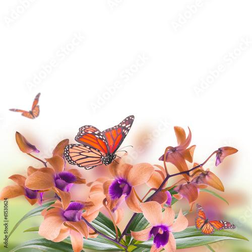 tle-kwiatow-tropikalnych-storczykow-i-motyli