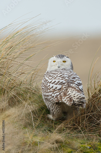 Photo Stands Owl Snowy owl