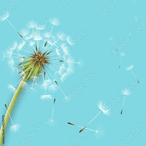 Photo  White dandelion with pollens isolated