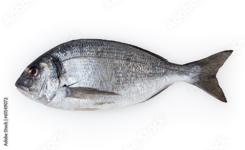 Obraz na plátně  Fish dorado isolated on white background with clipping path