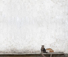 Cat Sitting On The Bench