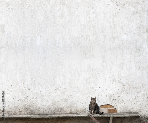 Fototapeta beton   kot-na-tle-betonowej-sciany