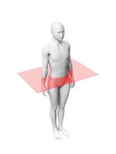 Anatomy Layer - Transverse Plane