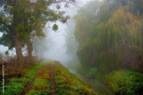 Foto auf Acrylglas Wald im Nebel foggy morning, misty trail