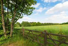 Green Spring Landscape
