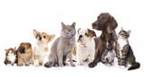 Grupa kotów i psów na białym tle