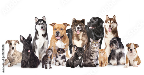 Deurstickers Franse bulldog Group of dogs and cats sitting in front of a white background.