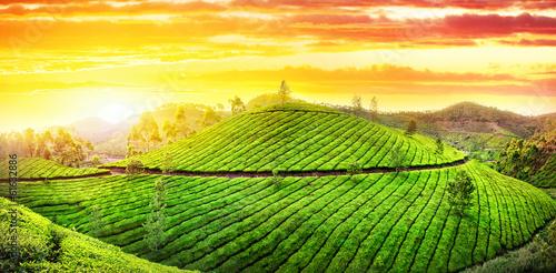 Tea plantations panorama Wallpaper Mural