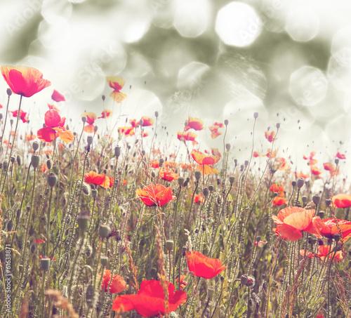 Poppy Fototapete