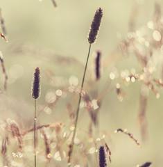 Fototapeta samoprzylepna letnia łąka