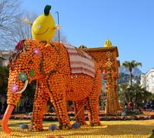 Eléphant En Citrons