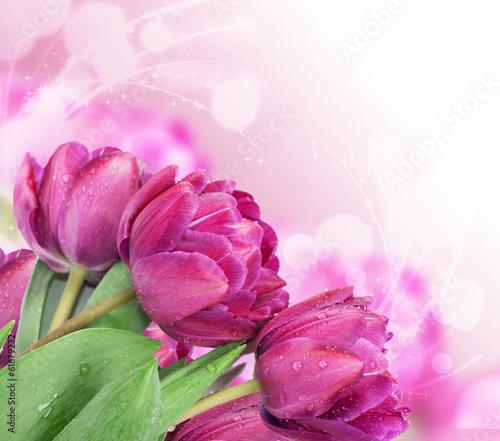 swieze-wiosenne-kwiaty-tulipanow-jako-projekt-pocztowki-z-wakacji