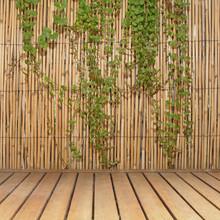 Fond De Canisse Avec Végétation