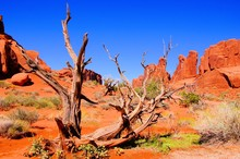 Arches National Park, USA, View Of Park Avenue With Dead Wood