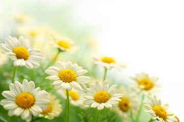Panel Szklany Podświetlane Do przedpokoju Daisy flower