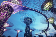 Supertree Grove In The Graden By The Bay In Singapore