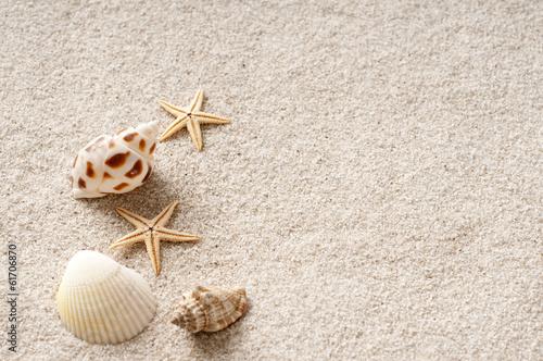 貝殻 砂浜
