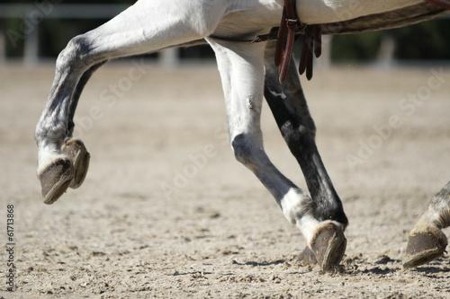 La pose en embrasure Equitation Kutschpferde im Gleichschritt