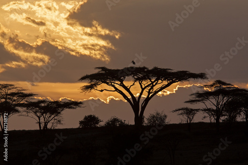 Poster Afrika Sunset safari