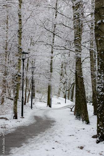 Tuinposter Berkbosje Winter road covered in snow