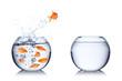 canvas print picture - fish courage concept