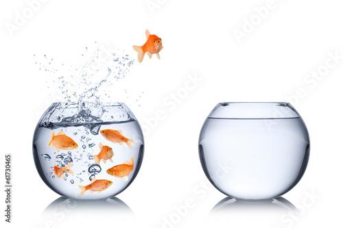 Fotografía  fish courage concept