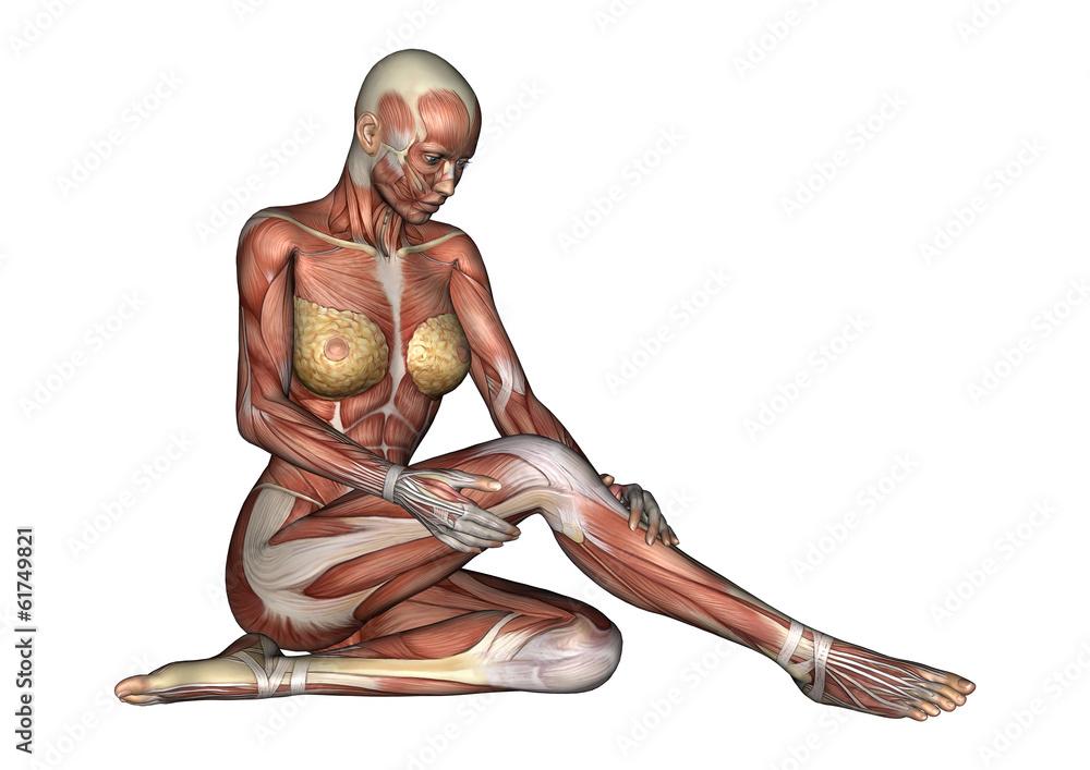 Female Anatomy Figure Foto Poster Wandbilder Bei Europosters