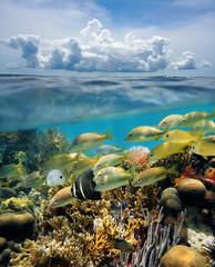 Split view underwater coral reef and cloud