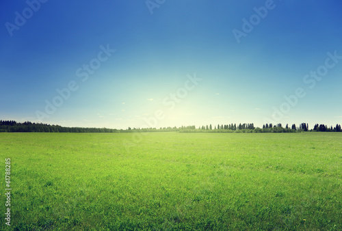 Canvas Prints Culture field of spring grass and forest