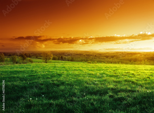 Cadres-photo bureau Miel field of spring grass in sunset time